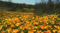 Desert Flower Landscape Stock Footage