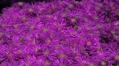 Tree Shadow Wildflowers Stock Footage