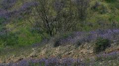 Arizona Desert Spring Hues - stock footage