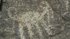 Old Rock Animal Carving Stock Footage