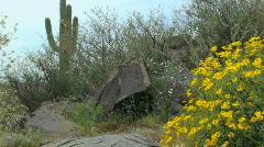 Arizona Desert Hidden Petroglyphs Stock Footage