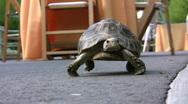 Baby Tortoise Stock Footage