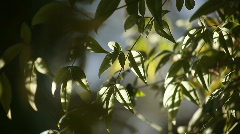 Leaves in sun and shade Stock Footage