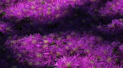 Vibrant Pink Wildflowers Stock Footage
