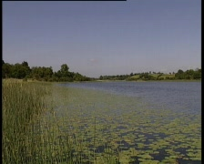 Lily Pad Lake Stock Footage