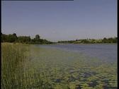 Lily Pad Lake Stock Footage