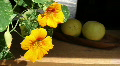 Yellow Flower And Citrus Fruit Footage