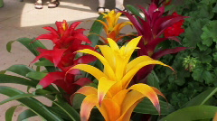 Warm Color Flowers Stock Footage