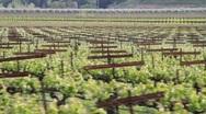 Vineyards Stock Footage
