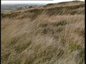 Mountain Grass Stock Footage