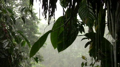 Rainstorm in Andean cloudforest Stock Footage