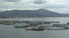 Aquaculture near Mytikas  Stock Footage