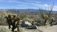 Stock Video Footage of Anza Borrego ocotillo and cholla