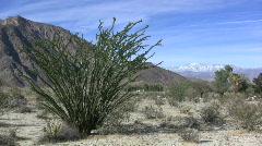 Anza Borrego mountains beyond ocotillo  Stock Footage
