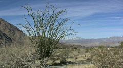 Anza Borrego desert scene with ocotillo  Stock Footage