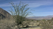 Stock Video Footage of Anza Borrego desert scene with ocotillo