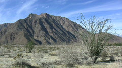 Anza Borrego ocotillo and mountain Stock Footage