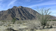 Stock Video Footage of Anza Borrego ocotillo and mountain