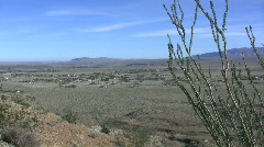 Anza Borrego ocotillo frames valley Stock Footage