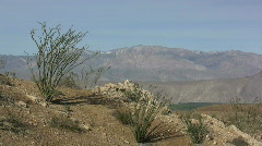 Anza Borrego ocotillo on slope over valley Stock Footage