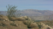 Stock Video Footage of Anza Borrego ocotillo on slope over valley