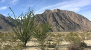 Stock Video Footage of Anza Borrego ocotillo and mountains