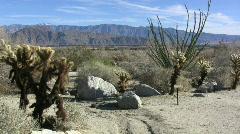 Anza Borrego ocotillo and cactus Stock Footage