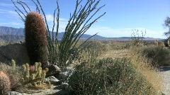 Anza Borrego ocotillo amd cactis Stock Footage