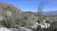 Stock Video Footage of Anza Borrego ocotillo distant view