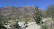 Stock Video Footage of Anza Borrego view with ocotillo