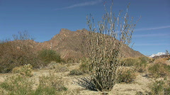Anza Borrego view with ocotillo Stock Footage