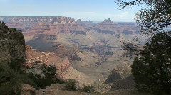 Arizona Grand Canyon scene with tree limbs Stock Footage