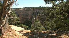Arizona Grand Canyon with pines - stock footage