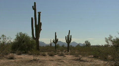 Arizona saguaro & mountains by globescope - stock footage