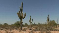 Arizona saguaro in the desert - stock footage