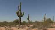 Arizona saguaro in the desert Stock Footage