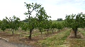 Fruit Trees Footage