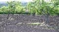 Fruit Trees HD Footage
