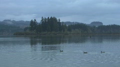 Ducks on Silver Lake in late evening Stock Footage