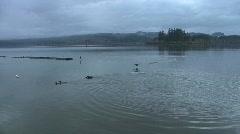 Ducks on Silver Lake Stock Footage
