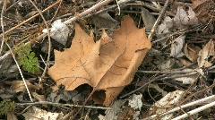 Fallen leaf Stock Footage