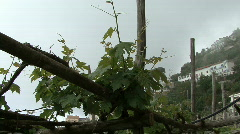 Furore foggy grape vines Stock Footage
