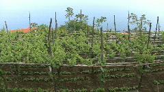 Vineyard at Furore on Amalfi Coast Stock Footage