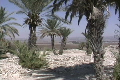Date palms at Tell Megiddo Stock Footage