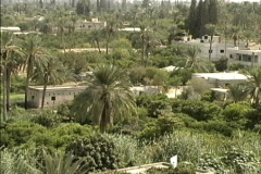 Gardens in Jericho Oasis Stock Footage