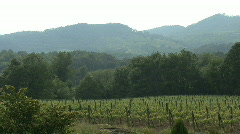 View of a vineyard and mountains in italy Stock Footage