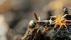 Spider attack Stock Footage