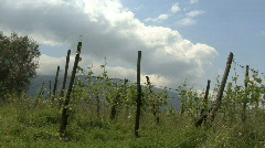 An organic vineyard in Calabria Italy Stock Footage