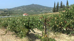 Peloponnesus landscape with grapevines Stock Footage