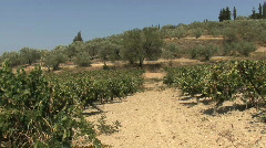 Nemena landscape with grapevines Stock Footage